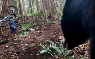 Medvjed u šumi