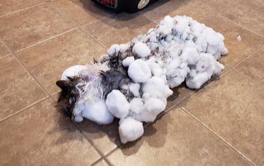 Fluffy (Foto: Facebook)