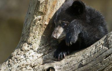 Mladunče medvjeda, ilustracija (Foto: DPA/PIXSELL)