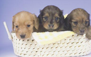 Tri štenca