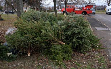 Odbačena božićna drvca (Foto: Marko Prpic/PIXSELL)
