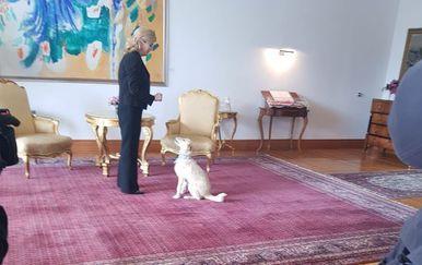 Predsjednica s kujicom Kikom (Foto: Dnevnik.hr) - 1