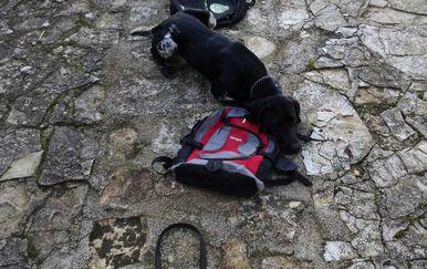 Pas Duks otkrio je drogu (Foto: PU istarska)
