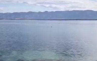 Riba je rastjerala kupače (screenshot: Dnevnik.hr) - 1