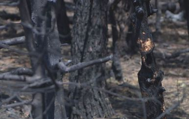 Posljedice požara/Ilustracija (Foto: Dnevnik.hr)
