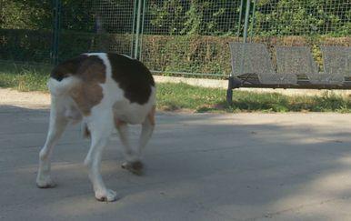 Sve je više napuštenih pasa u skloništima (Foto: Dnevnik.hr)