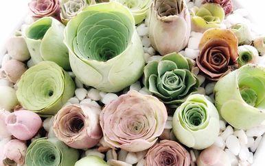 Sukulenti u obliku ruže