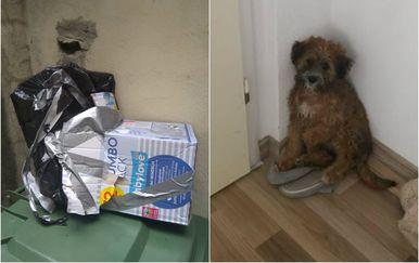 Kutija i štene (Foto: Facebook/Udruga Šapama od srca Makarska)