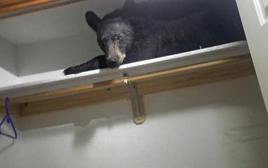 Medo koji je zaspao na polici ormara (Screenshot: Facebook/Missoula County Sheriff\'s Office)