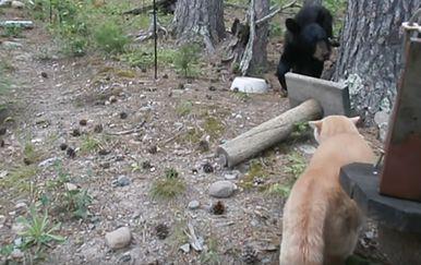 Mačka i medvjed (Foto: Screenshot/YouTube)