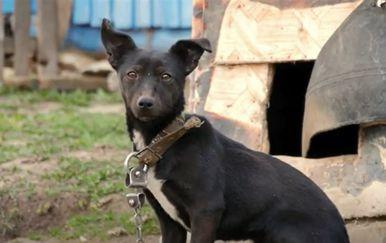 Kampanja protiv držanja pasa na lancu - 1