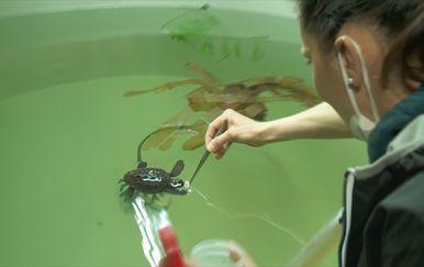 Pulski akvarij - 3