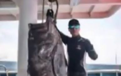 Gigantski ulov kineskih ribara: Ulovili kirnju dugačku 1,8 metara (Screenshot YouTube)