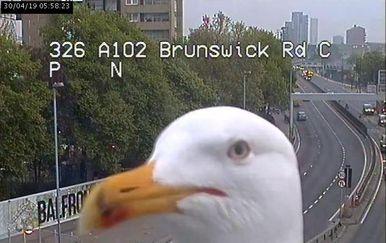 Galebovi ispred nadzornih kamera u Londonu (Foto: Twitter/TfL) - 2