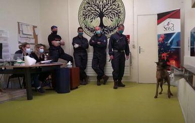 Psi i koronavirus - 3