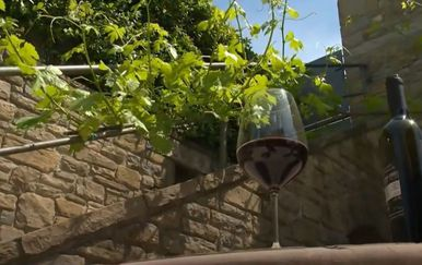 Problemi istarskih vinara - 5