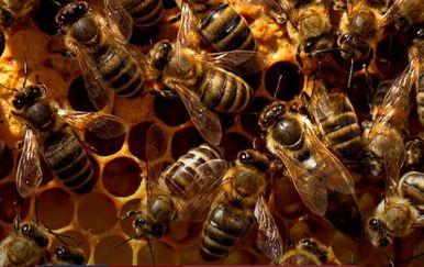 Rojevi pčela - 5