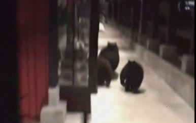 Medvjedi zalutali u trgovački centar (Screenshot: AP)