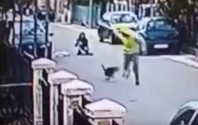 Pas Medo laje na lopova (Foto: Screenshot)