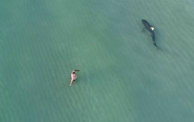 Tigrasti morski pas je, statistički gledano, druga najopasnija psina po ljude (FOTO: YouTube/Screenshot)