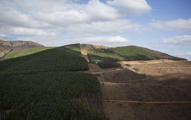 Deforestacija uzrokuje izumiranje životinjskih vrsta (Foto: AFP)