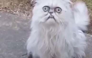Mačka (Foto: Screenshot/YouTube)