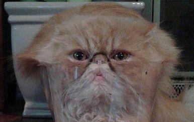 Mačke (Foto: izismile.com)