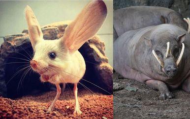 Neobične životinje (Foto: brightside.me)