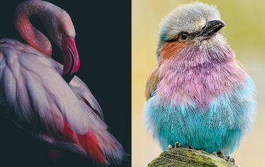 Šarene životinje (Foto: brightside.me)