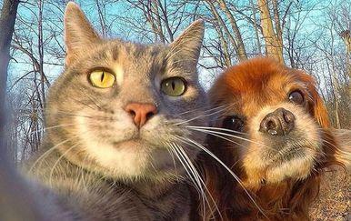Mačji selfie (Foto: brightside.me)