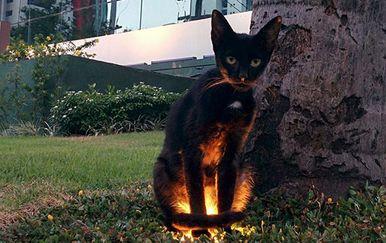 Jezive životinje (Foto: boredpanda.com)