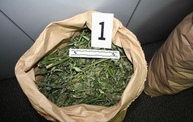 Policija u kući u Zaprešiću pronašla 30 kilograma marihuane (Foto: PU zagrebačka) - 1