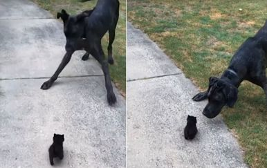 Pas i maca (Foto: Screenshot/YouTube)