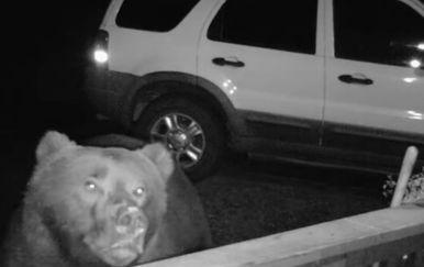 Medvjed (Foto: Screenshot/YouTube)
