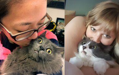 Mačke i selfiji (Foto: sadanduseless.com)