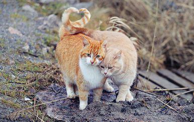Mačke (Foot: Getty)