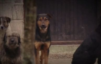 Psi u kavezu, ilustracija