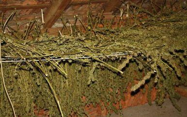 U Sesvetama skrivali 228 kilograma marihuane - 4