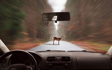 Divljač na cesti, ilustracija