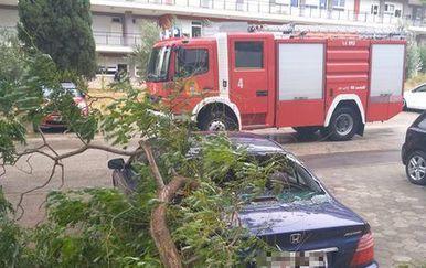 Orkanska bura u Splitu rušila grane (Foto: Dnevnik.hr)