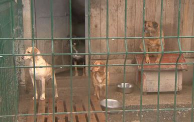 Psi iza ograde (Foto: Dnevnik.hr)