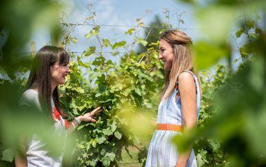 Hrvatska vinska priča u finalu natjecanja američkog Wine Spectatora - 4