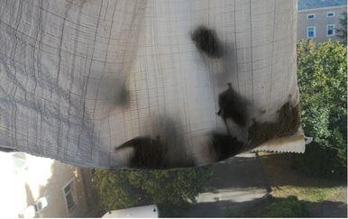 Uhvaćeni šišmiši (Foto: Glas Istre/Z.S.)