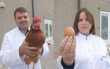 Kokoš ili jaje (Foto: Dnevnik.hr)