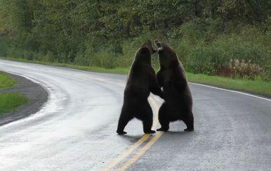 Medvjedi (Foto: Screenshot)
