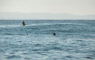 Surfer i morski pas, ilustracija