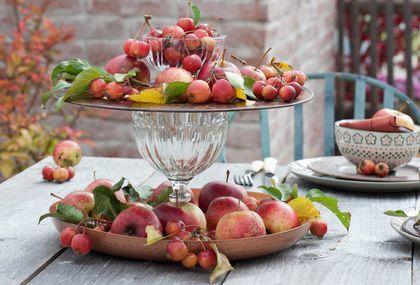 Svježe jabuke mogu biti sjajan detalj za ukrašavanje doma - 1