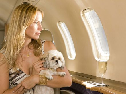 Psi u avionu