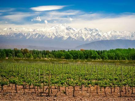 Vinograd pokraj Mendoze