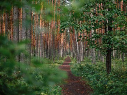 Trail - 1